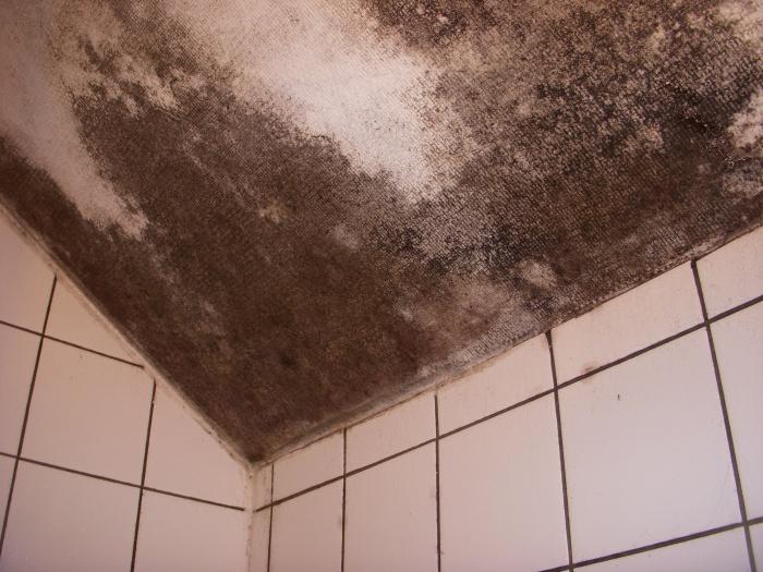 Remise aux normes sanitaires et électriques d'un immeuble Parsien