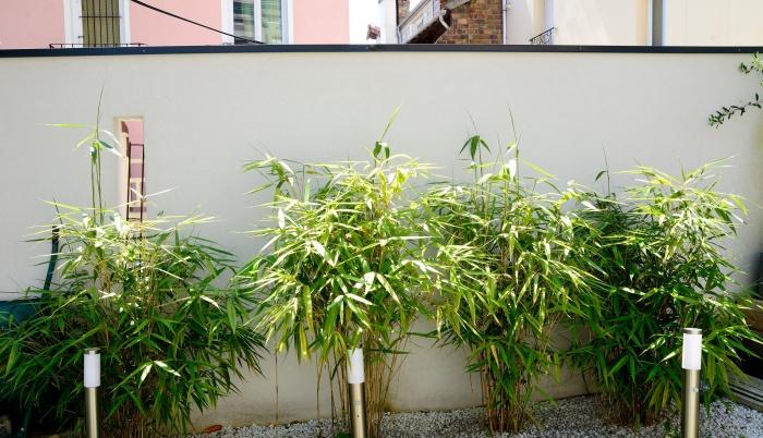 Maison Cubique : jardin